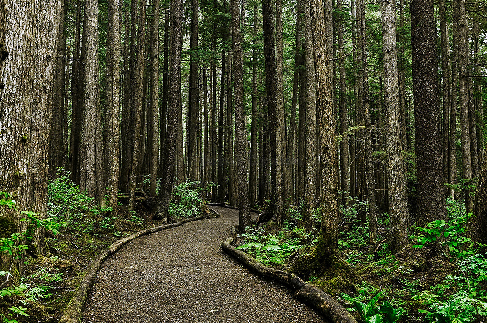 Hiking trail, Hoonah, Alaska, USA.