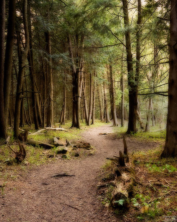An Ortonized photograph of the Seaton Hiking Trail as it passes through a mixed cedar and fir forest.  Near Green River, Ontario.