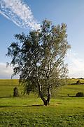 Wiesen, Bäume, Landschaft Unterharz, Harz, Sachsen-Anhalt, Deutschland | trees, meadows, landscape Unterharz, Harz, Saxony-Anhalt, Germany