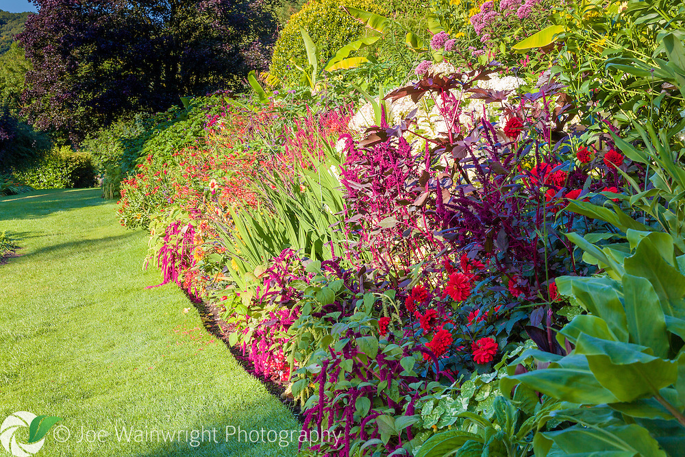 Vivid, late summer colours in the Tropical Garden at Dorothy Clive Garden, Staffordshire