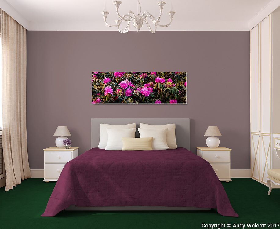 Room Display<br />
