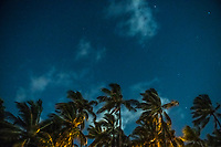 Palm trees in the moonlight, Mombasa, Kenya