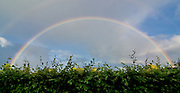 Full Rainbow Arc Over English Hedge in Warwickshire, UK, England