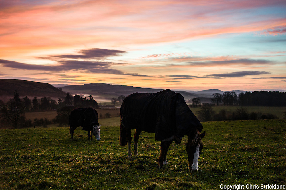Oxnam, Jedburgh, Scottish Borders, UK. 14th December 2015. Horses graze at sunrise in the village of Oxnam near the Anglo Scot border. © Chris Strickland / Alamy Live News