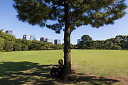A young man is seating on the grass under a pine tree in Imperial West Garden - Tokyo - Japan - 2018 August 26th