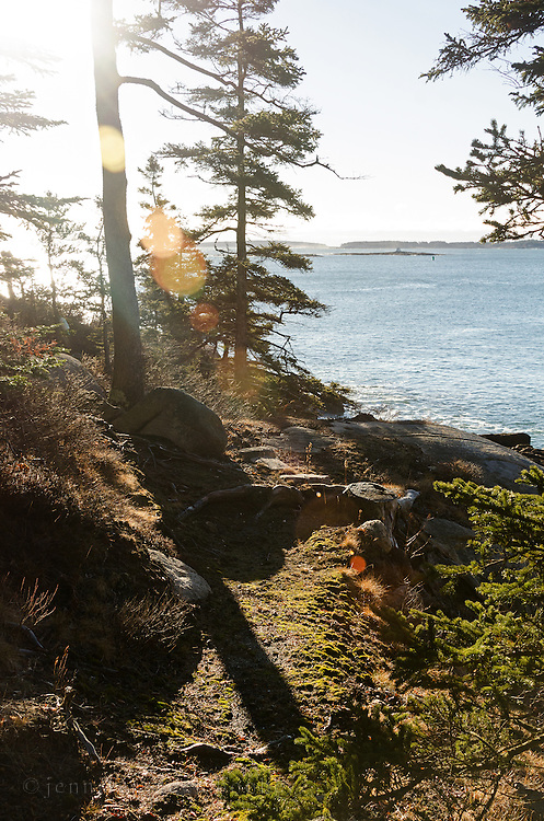 Morning light sparkles through the trees on a rocky promontory on Mount Desert Island, Maine.