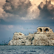 ruins of a castle on a small island with hundreds of birds