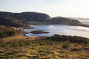 Sitgagran (Picea sitchensis), svartelistet, fremmed treslag i Norge. Har spredt seg helt opp på fjelltoppene på Stokkøya i Sør-Trøndelag. Flere miljøorganisasjoner deltar, som Norsk botanisk forening, Naturvernforbundet og WWF.
