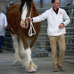 Clydesdale Horse Society Winter Show Nov 2015