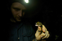Foja Mountains RAP Expedition herpetologist Paul Oliver examines a gecko he has just captured, that he believes is a new species.