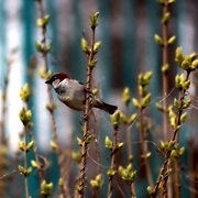 Close-up shot of a bird amidst flowers, in Hong Kong, by Jem Gunazon.<br /> <br /> Jem Guanzon, from the Philippines joined Lensational in May 2013. Alongside her job as a domestic worker, she earns extra income as an event photographer for the Embassy of the Philippines in Moscow, Russia, and through selling photos via Lensational.