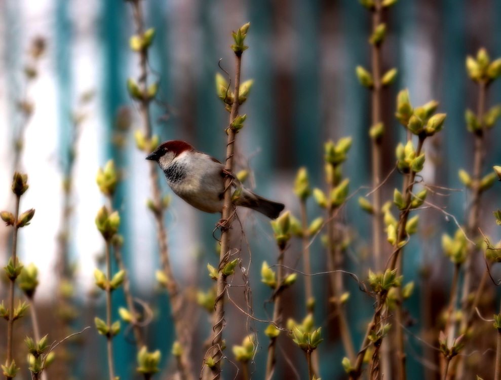 Close-up shot of a bird amidst flowers, in Hong Kong, by Jem Gunazon.<br />