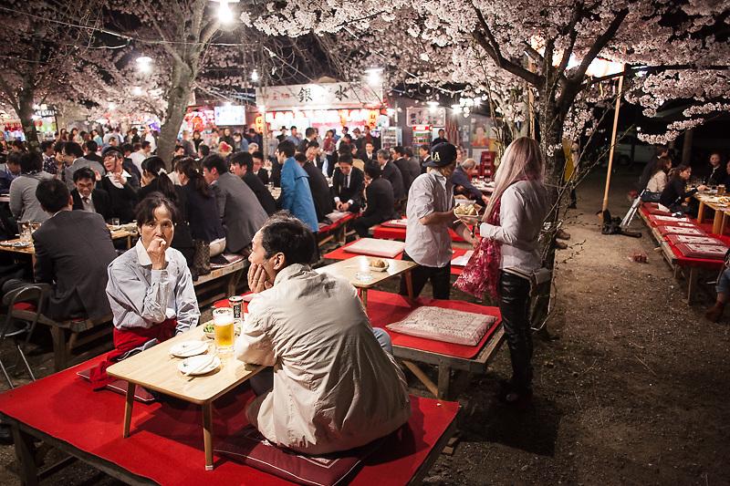sakura, cherry blossoms, Japan, Kyoto, Osaka, Maruyama Park hanami, Japanese culture, Japanese traditions
