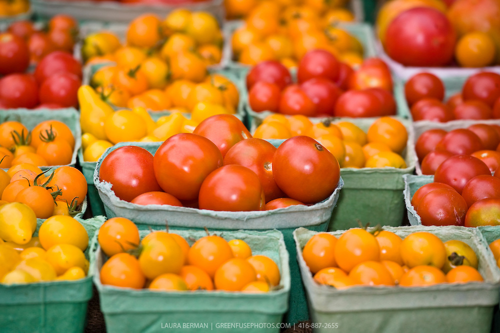 Red, yellow and orange cherry tomatoes in pint boxes at the farmers market.