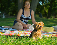 Sands Point, New York, U.S. - July 5, 2014 - Juliette, a 3.5 lbs. teacup Yorkie from Queens, has come with her family, who is sitting on picnic blanket, during Independence Day weekend to visit Sands Point Preserve on the Long Island Sound of North Shore Gold Coast area. The public park had many visitors this Saturday of Independence Day Weekend when sunny warm weather arrived after the rainy July 4th.