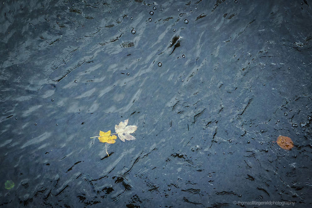 Autumn in Ireland, 2012: leaves float in the water of a dark stream