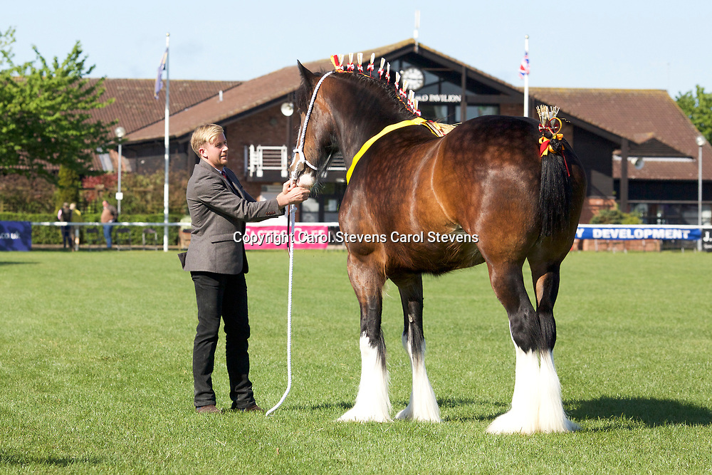 Jim &amp; Matthew Burks' DARESBROOK DIANA  Filly  f 2013<br />