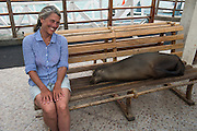 Galapagos sea lion (Zalophus wollebaeki)<br /> Chair on dock<br /> Puerto Ayora<br /> Santa Cruz Island<br /> Galapagos<br /> Ecuador,  South America