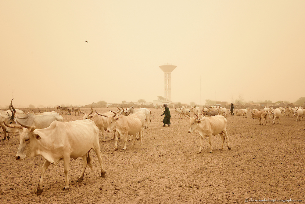 Dank einem von HEKS mitfinanzierten Bohrbrunnen können Viehbauern im sehr heissen und trockenen YOUNOUFERE in Senegal ihre Kühe auch in der Trockenzeit mit frischem Wasser versorgen.