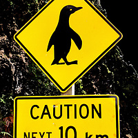 Penguin Crossing Road Sign on West Coast of New Zealand Near Greymouth<br />