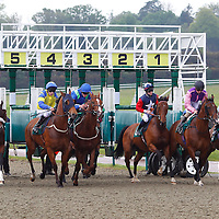 Lingfield 11th May