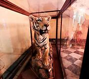 India, Madhya Pradesh. Gwalior. Jai Vilas Palace. H.H. Maharaja Jiwajirao Scindia Museum. Stuffed out tigers.