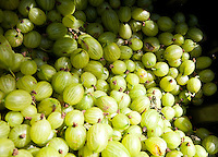 Close up of bunch of gooseberries
