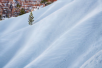 Winter drifts of snow along the canyon walls of Bryce Canyon National Park.