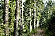 Naturpark Schwarzwald Mitte-Nord..Naturschutzgebiet Glaswaldsee , Nadelwald