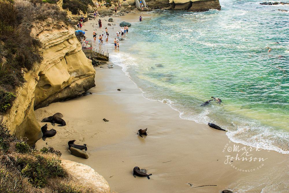 Sea lions & swimmers, La Jolla Cove, San Diego, California, USA