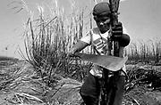 Trabalho infantil nos canaviais de Campos, Rio de janeiro. ..I work infantile in Campos' sugar cane plantations in Rio of January..Trabalho infantil nos canaviais de Campos, Rio de janeiro. ..I work infantile in Campos' sugar cane plantations in Rio of January..