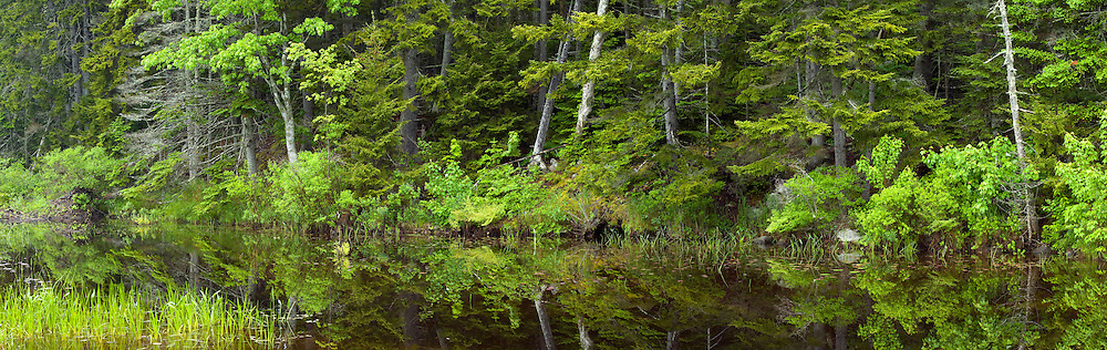 The lush coastal vegetation is reflected in this calm pond in Acadia National Park, Maine, USA
