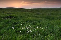 Flint Hills prairie - Kansas
