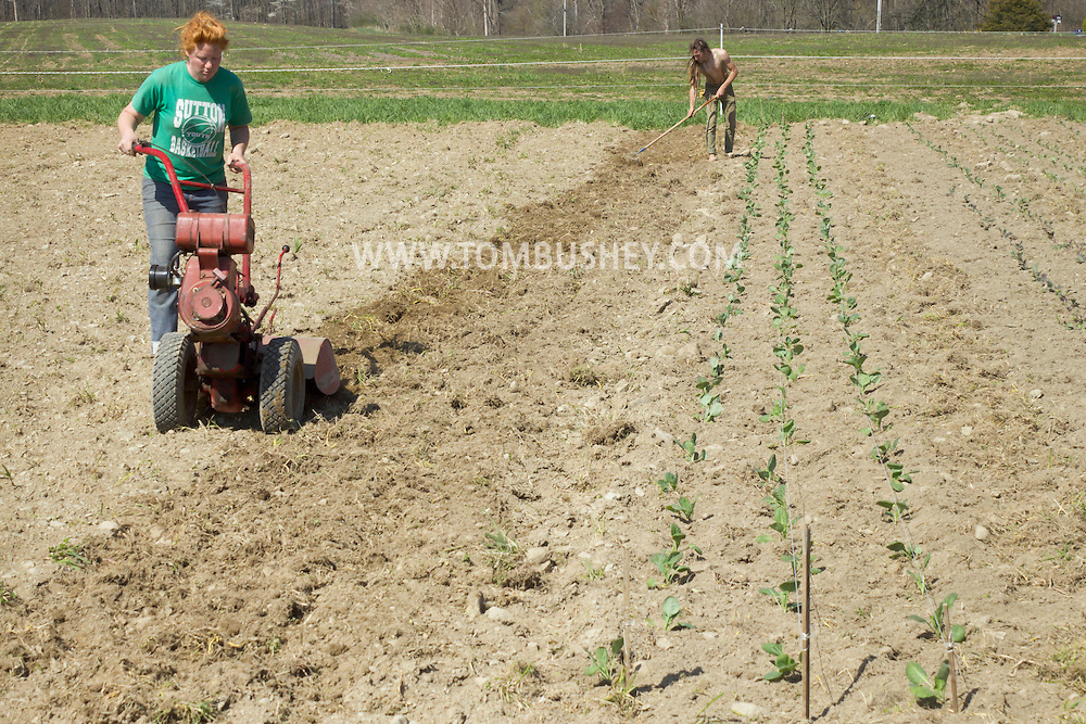 Chester, New York - Spring planting at Peace and Carrots Farm  on April 23, 2013. The CSA (Community Supported Agriculture) farm is in its first growing season