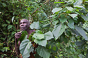 James, one of the elders of the traditional Batwa pygmies from the Bwindi Impenetrable Forest in Uganda talks through local species of plant and their uses. They were indigenous forest nomads before they were evicted from the Bwindi Impenetrable Forest when it was made a World Heritage site to protect the mountain gorillas.  The Batwa Development Program now supports them.