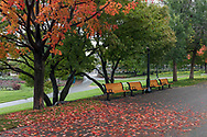 Benches and fall maple colours at Major's Hill Park (named after Major Daniel Bolton) in Ottawa, Ontario, Canada