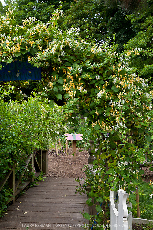 Honeysuckle-covered arbor at the entry to a butterlfy garden.