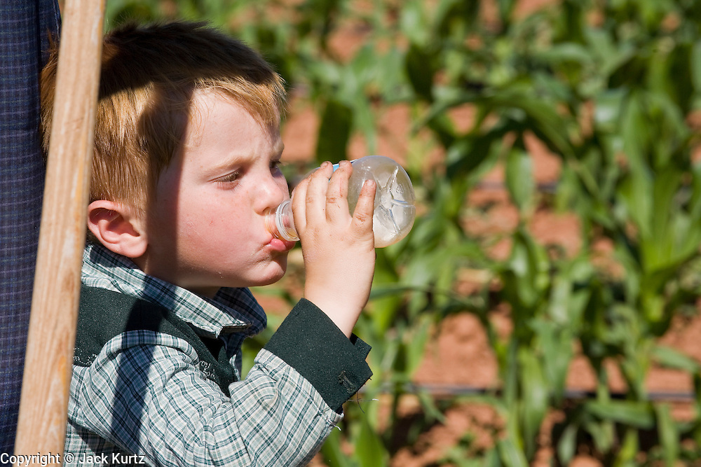 """June 16, 2008 -- COLORADO CITY, AZ: A youngster in the Jessop family drinks a bottle of juice while watching his relatives weed the community corn plot in Colorado City, AZ. The Jessops are a polygamous family and members of the FLDS. Colorado City and neighboring town of Hildale, UT, are home to the Fundamentalist Church of Jesus Christ of Latter Day Saints (FLDS) which split from the mainstream Church of Jesus Christ of Latter Day Saints (Mormons) after the Mormons banned plural marriage (polygamy) in 1890 so that Utah could gain statehood into the United States. The FLDS Prophet (leader), Warren Jeffs, has been convicted in Utah of """"rape as an accomplice"""" for arranging the marriage of teenage girl to her cousin and is currently on trial for similar, those less serious, charges in Arizona. After Texas child protection authorities raided the Yearning for Zion Ranch, (the FLDS compound in Eldorado, TX) many members of the FLDS community in Colorado City/Hildale fear either Arizona or Utah authorities could raid their homes in the same way. Older members of the community still remember the Short Creek Raid of 1953 when Arizona authorities using National Guard troops, raided the community, arresting the men and placing women and children in """"protective"""" custody. After two years in foster care, the women and children returned to their homes. After the raid, the FLDS Church eliminated any connection to the """"Short Creek raid"""" by renaming their town Colorado City in Arizona and Hildale in Utah.   Photo by Jack Kurtz"""