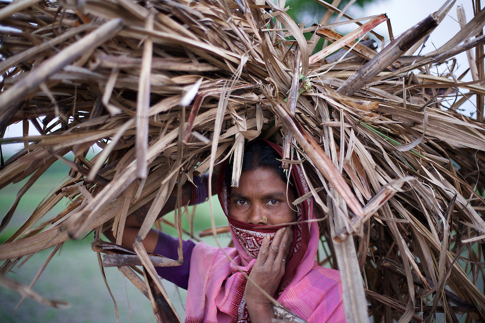 A Musahar woman from Charbhariya carries chaff from a recently harvested field of sugar cane. The chaff will be used to feed her buffalo. Sugar cane is a cash crop.<br /> <br /> Charbhariya village is home to 87 Musahar families. Despite generations of repression, this community, with the help of local campaigning groups including Action Aid, have achieved some recent successes in the fight for the provision of services. A drainage system is being built in the village as part of the Food For Work Programme and employment has been provided under the National Rural Employment Guarantee Programme. These Government of India schemes are designed to use the rural unemployed to generate productive assets and infrastructure. The campaign for land-rights continues and so far only one of Charbhariya's Musahars has been granted land by the government. The Charbhariya women's self help group is coordinating action to ensure that the local government school has a properly functioning midday-meals programme and that the government funded ICDS (Integrated Child Development Service) is fully operational. Panchayat (or village level) council leader Prabhu Prasad is himself Musahar which provides the community a significant opportunity to demand their rights from the local administration. Direct action by the community recently ensured that below the poverty line ration cards were distributed to every family in Charbhariya.<br /> <br /> The Musahar community are one of India's most impoverished and marginalised groups. They are considered untouchable within the heavily stratified Hindu caste system. Most Musahar people reside in rural districts of Nepal and India's Uttar Pradesh, Madhya Pradesh and Bihar states where they are the victims of ingrained local prejudice and administrative indifference. Literacy levels in the community are as low as 2 percent and child malnutrition is common. The Musahar are poorly represented in both district-level government and the local administration