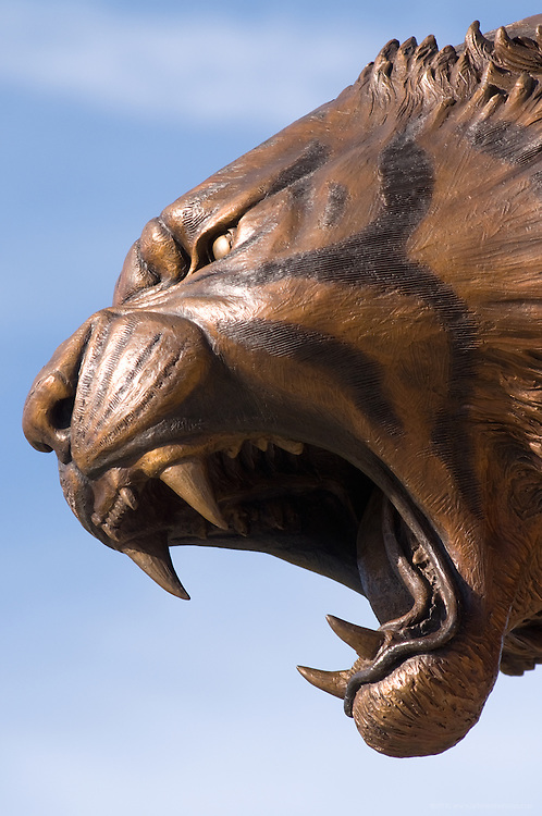 Sculpture of the St. X Tiger on the school's campus by Matt Weir, photographed Tuesday, Oct. 20, 2009 in Louisville, Ky. (Photo by Brian Bohannon)