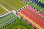 Nederland, Noord-Holland, gemeente Schagen, 20-04-2015;<br /> begin van de bloei van bloembollenveld in het voorjaar, omgeving Sint Maartensbrug. Kop van Noord-Holland, historisch gebied voor de teelt van bollen op geestgrond.<br /> <br /> Beginning of flowering bulbs field in spring.<br /> luchtfoto (toeslag op standard tarieven);<br /> aerial photo (additional fee required);<br /> copyright foto/photo Siebe Swart
