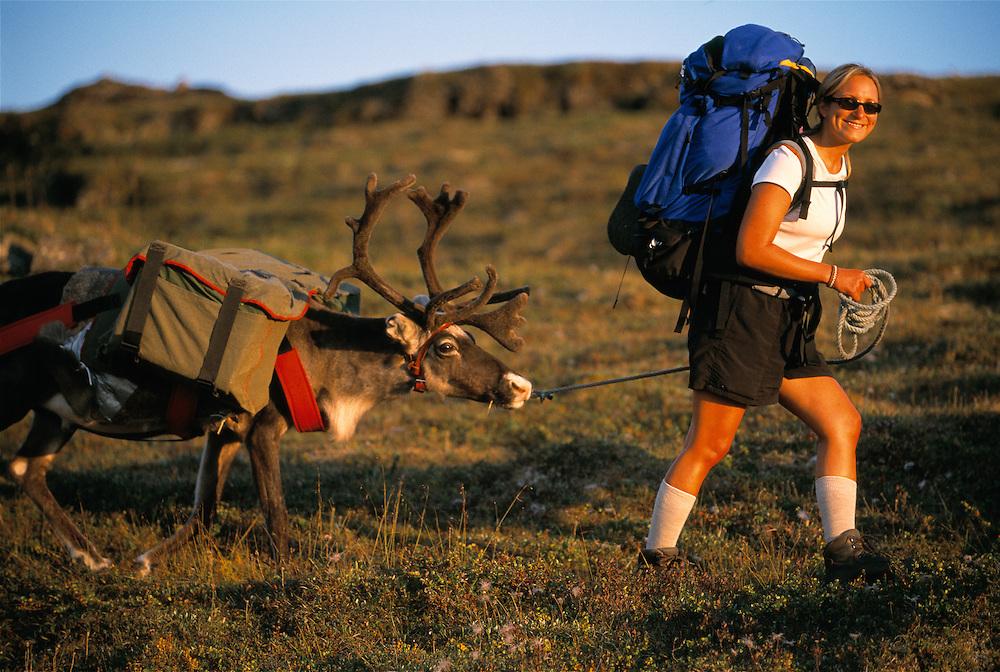 Lindsey Lindgren on a reindeer, Rangifer tarandus, trekking trip with Sami tour operator Pathfinder Lapland, Sarek National Park, Laponia World Heritage Area, Lappland, Norrbotten, Sweden