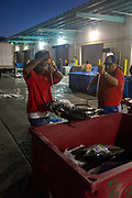 United Fish Auction, Honolulu, Oahu, Hawaii