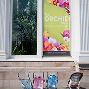 March 27, 2009 - Bronx, NY : Strollers are parked outside the Haupt Conservatory. The New York (Bronx) Botanical Garden's annual orchid show is on exhibit in the Enid A. Haupt Conservatory through April 12, 2009.  This year's show, titled: Brazilian Modern, was designed by landscape architect Raymond Jungles.  While past shows were, perhaps, more concerned with botany, Jungles' interpretation of the Botanical Garden mainstay concentrates more on shape and design.  Orchids blossom form enormous hanging baskets, cascade from walls and spill forth from large, block-shaped, modernist planters.