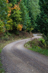 Tiger Mountain Road, Tiger Mountain, Issaquah, Washington, US
