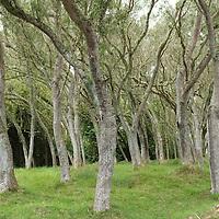 Humid Forest near Mafate Circus, Reunion Island.