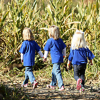 Adam Robison | BUY AT PHOTOS.DJOURNAL.COM<br /> Three grils from Calvary Baptist Pre-School make their way through the corn maze as their class visited the pumpkin patch at the Tueplo Buffalo Park on Tuesday October 20. The corn maze was one of the children's favorite things to do during their visit.