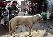 A stray dog roams a narrow street in Mandalay, Myanmar.