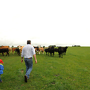 Farmer Enda Doran, and his three year old son Adam, checks their cattle in one of his farming land in Ballinasloe, Co. Galway...Mr. Doran is the eldest of 3 brothers and sisters and by tradition the heritor of the family farming land and business. His farming activities involve cereal and potato production, cattle and sheep breathing and contract work for other farmers.