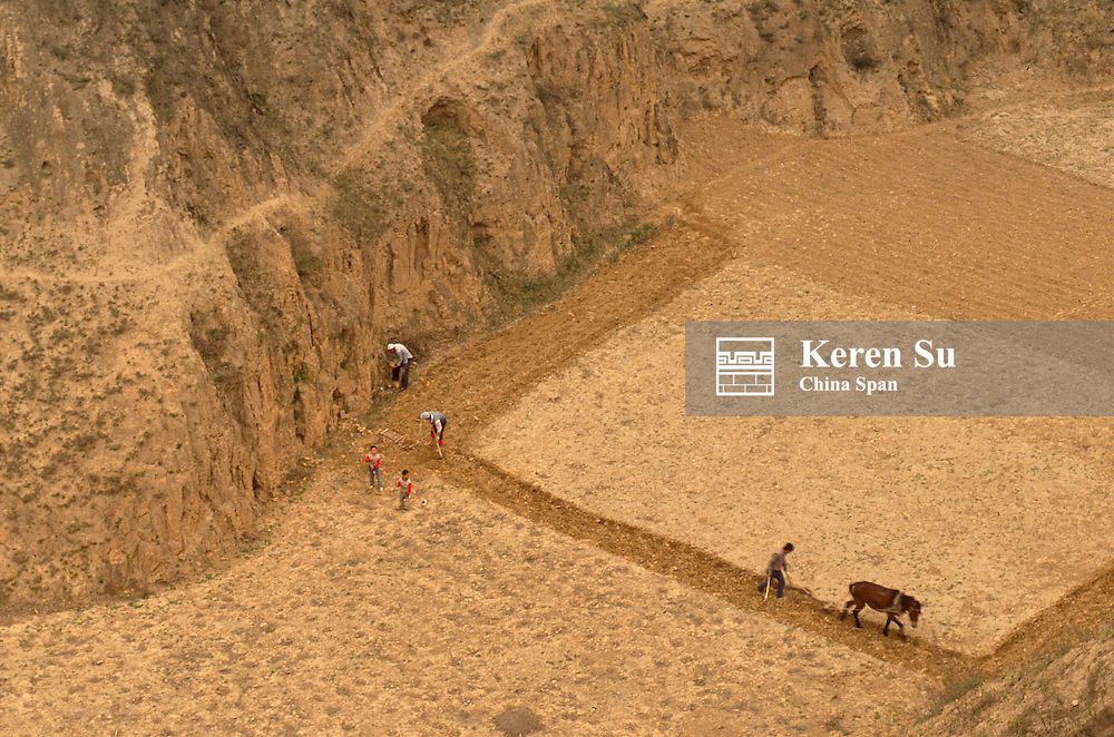 Farmer ploughing at the bottom of clay cliff, Loess Plateau, Huanghe (Yellow River) area, Shaanxi Province, China